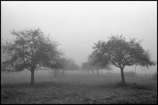 Galerie photo : Paysages et nature, photo Noir et Blanc, Normandie, © Vincent LUC