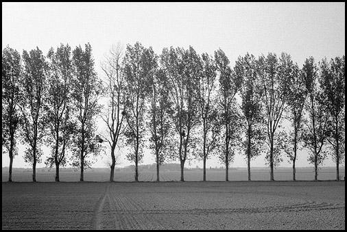 Galerie photo : Paysages et nature, photo Noir et Blanc, Normandie, © Vincent LUC
